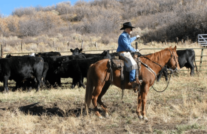 Terry Nash Cowboy Poet Colbran Colorado Cows